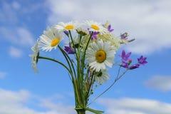 Buketten av fältet blommar mot himlen Arkivfoton