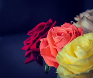 Buketten av färgrika rosor stänger sig upp Arkivbild