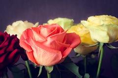 Buketten av färgrika rosor stänger sig upp Arkivfoton