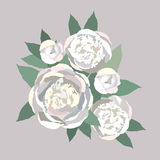 Buketten av försiktig white blommar pioner Arkivbild