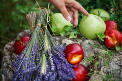 Buketten av lavendel och frukten ser härlig En kvinna trycker på en Apple royaltyfria foton