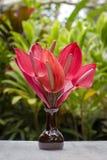 Buketten av röda tropiska blommor Anthurium eller flamingoblomman i keramisk vas står i trädgård bali indonesia close upp Royaltyfri Fotografi