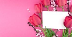 Buketten av rosa tulpan och våren blommar på rosa bakgrund Arkivbilder