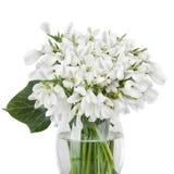 Buketten av snödroppen blommar i korgen som isoleras på den vita backgroen Arkivbilder