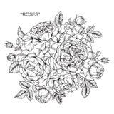 Buketten av steg blommor som drar och, skissar Royaltyfri Bild