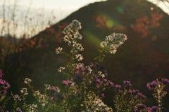 Buketten av vitt och violeten blommar i en trädgård Arkivbilder