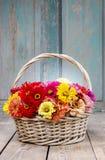 Buketten av zinniaen blommar i vide- korg Arkivfoton