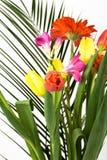 buketten blommar fjädern Fotografering för Bildbyråer