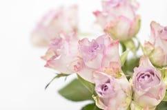 buketten blommar fjädern Arkivfoto