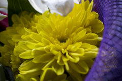 buketten blommar yellow Royaltyfri Foto