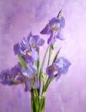 buketten irises den purpura fjädern Royaltyfri Fotografi