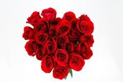 buketten kan rosen för droppleafsred se vatten dig Royaltyfri Bild