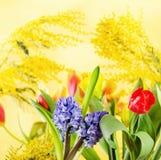 Fjädra blommor och en mimosa Royaltyfria Bilder