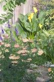 buketter arbeta i trädgården fjädern Royaltyfri Bild