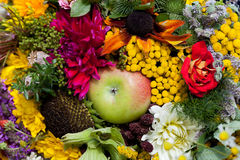 Buketter av blommor och örter royaltyfri bild