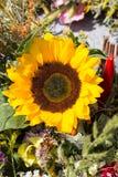 buketter av blommor och örter Royaltyfria Foton