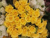 Buketter av gula rosor Royaltyfri Fotografi
