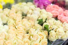 Buketter av multiclored rosor ny bakgrundsblomma Blomsterhandlareservice Blomsterhandel för grossist för bröllopgåva Blommalagrin Arkivfoto