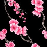 Buketter för sömlös modell för vattenfärg härliga med sakura vårblom royaltyfri foto