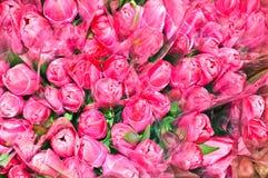 buketter många rosa tulpan Royaltyfri Bild