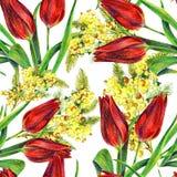 Bukettmimosa och röd tulpanvattenfärg Arkivfoto