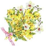 Bukettmimosa, orkidé och pilbåge, vattenfärg Royaltyfri Foto