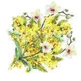 Bukettmimosa, orkidé och pilbåge, vattenfärg Arkivfoto