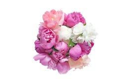 Bukettpionblommor rosa färger och röd färg som isoleras på vit bakgrund arkivbild