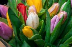 Buketttulpan, tulpan, tulpan, blomma, biossom, växter Royaltyfri Foto