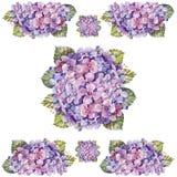 Bukettvanlig hortensiablomma, vattenfärg Arkivfoton