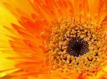 bukietów formie ciągnąć wzoru mały bezszwowy kwiat ilustracji