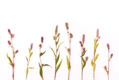 bukietów formie ciągnąć wzoru mały bezszwowy kwiat mieszkanie nieatutowy, zasięrzutny widok Zdjęcia Royalty Free
