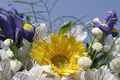 bukietów kwiaty zdjęcia royalty free