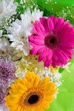 bukietów piękni kwiaty Fotografia Stock