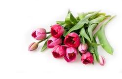 bukietów tulipany Fotografia Royalty Free