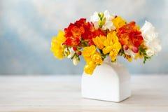Bukiet świeże stubarwne frezje w białej wazie zdjęcie royalty free