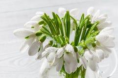 Bukiet śnieżyczki na drewnianym tle wiosna kwiat Macierzysty ` s dzień, walentynka dzień, kobiety ` s dzień 3 bukietów ostrości p Obrazy Stock