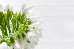 Bukiet śnieżyczki na drewnianym tle wiosna kwiat Macierzysty ` s dzień, walentynka dzień, kobiety ` s dzień 3 bukietów ostrości p Obraz Royalty Free