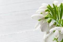 Bukiet śnieżyczki na drewnianym tle wiosna kwiat Macierzysty ` s dzień, walentynka dzień, kobiety ` s dzień 3 bukietów ostrości p Obraz Stock