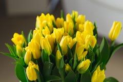 Bukiet żółci tulipany makro- Zdjęcia Royalty Free