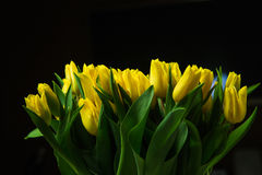 Bukiet żółci tulipany na ciemnym tle Zdjęcie Royalty Free