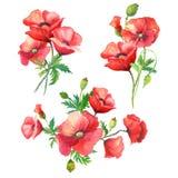 Bukiet akwareli kwiaty Obrazy Stock