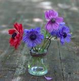bukiet anemon kwitnie w wazie fotografia royalty free