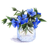 Bukiet błękitny barwinek kwitnie w szklanej wazie beak dekoracyjnego latającego ilustracyjnego wizerunek swój papierowa kawałka d Zdjęcie Stock