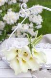 Bukiet biała kalia kwitnie w ogródzie (Zantedeschia) obraz stock