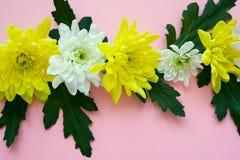 Bukiet białe i żółte chryzantemy na jasnoróżowym tle Fotografia Stock