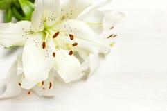 Bukiet białe leluje odizolowywać na białego drewnianego tła odgórnym widoku Kwitnie leluja bukieta białych kwiatów pięknego kwiec obrazy royalty free