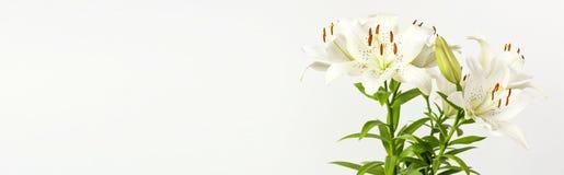Bukiet białe leluje odizolowywać na białym tle Kwitnie leluja bukieta białych kwiatów pięknego kwiecistego tło obrazy stock