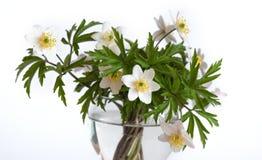 Bukiet biały anemon w szklanej czara obraz royalty free