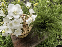 Bukiet biali dzwony w koszu Fotografia Stock